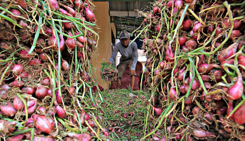 Foto Dinas Pertanian Bakal Dorong Budi Daya Bawang Merah