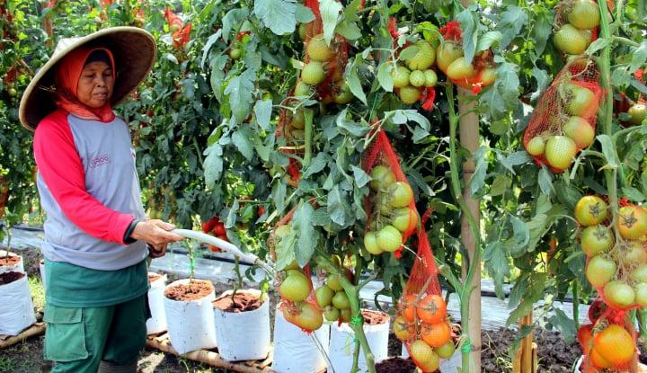 Foto Berita Berpotensi Tinggi, Airlangga Mau Genjot Ekspor Hortikultura
