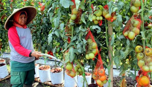 Foto Berpotensi Tinggi, Airlangga Mau Genjot Ekspor Hortikultura