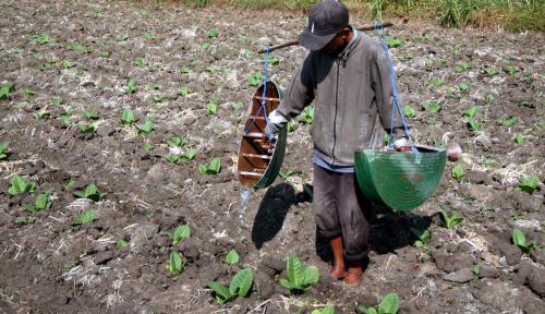 Foto Kekeringan Ancam Penurunan Produksi Pangan Hingga 60%