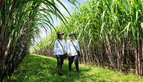 Foto Tahun Ini, PTPN XI Targetkan Produksi Tebu 4,7 Juta Ton