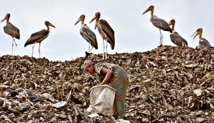 Greenpeace Temukan 700 Merek Sampah Plastik di Pantai - Warta Ekonomi