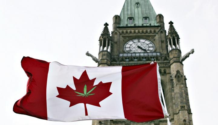 Foto Berita Pasokan Ganja di Kanada Ludes, Ini Sebabnya