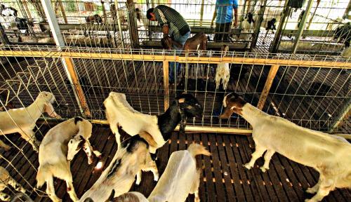 Foto YLKI Imbau Masyarakat Pilih Hewan Kurban yang Paling Sehat