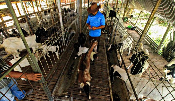 Juleha Edukasi Masyarakat Cara Sembelih Hewan yang Halal - Warta Ekonomi