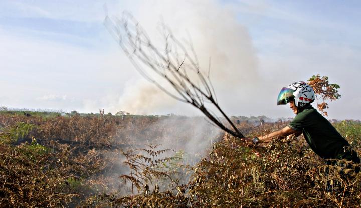 Awas, Karhutla di Sejumlah Wilayah Bakal Meningkat - Warta Ekonomi