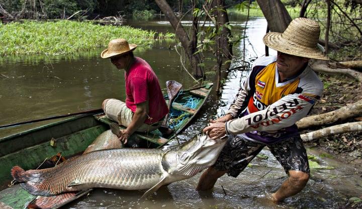 Foto Berita Susi: Yang Masih Pelihara Ikan Arapaima, Saya...