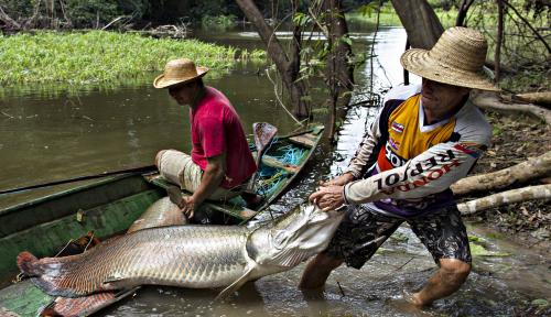 Foto Susi: Yang Masih Pelihara Ikan Arapaima, Saya...