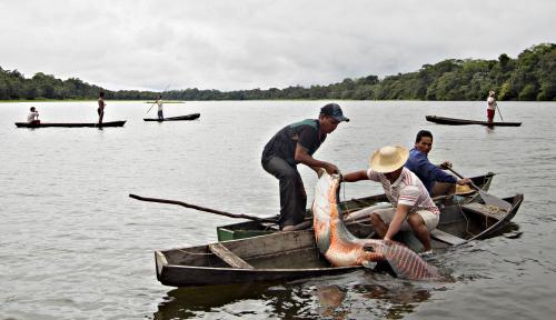 Foto Ini Alasan Kenapa Ikan Arapaima Sangat Berbahaya