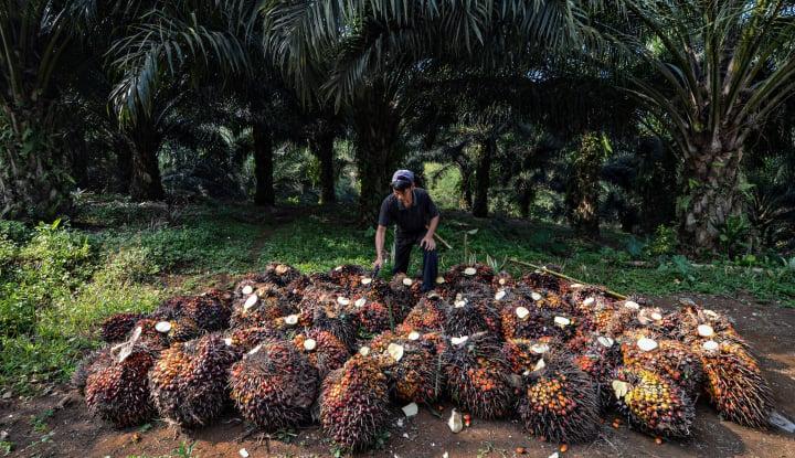 Ekspor Sawit Indonesia ke Uni Eropa Anjlok Hingga 39%