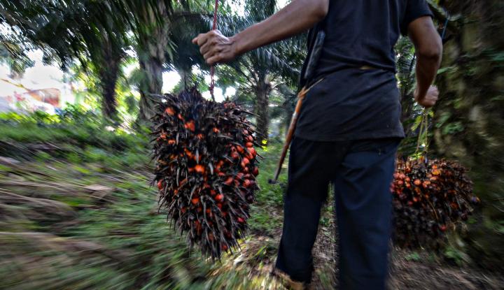 Foto Berita Sumut, Salah Satu Daerah Penghasil Kelapa Sawit Terbesar