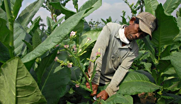60 Kabupaten di Indonesia Telah Terbitkan Perda Kawasan Tanpa Rokok - Warta Ekonomi