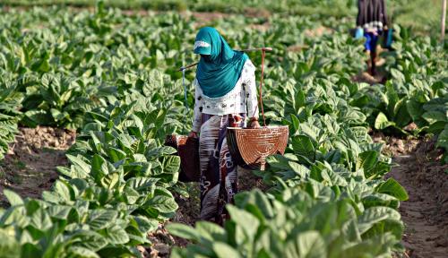 Hai Pemerintah, Dengar Nih Jeritan Pabrik Kecil Tembakau Soal Tarif Cukai SKT