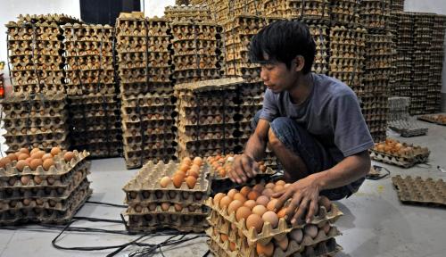 Foto Harga Komoditas Telur di Sidoarjo Kembali Normal
