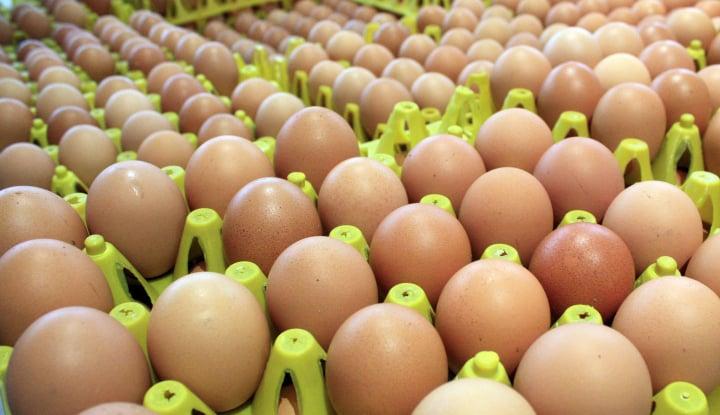 Foto Berita Puluhan Pembeli Serbu Telur Murah Rp19.500/Kg