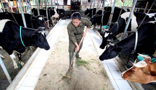 Bisnis Yogurt Semakin Menggeliat, Perusahaan Ini Luncurkan Produk Baru: Yogurt Non-Susu