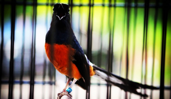 Foto Berita Jokowi Pernah Tawar Burung Ini Seharga Rp600 Juta, Penasaran?