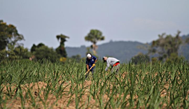 Koperasi Ini Maniskan Pasar Gula Organik Dunia