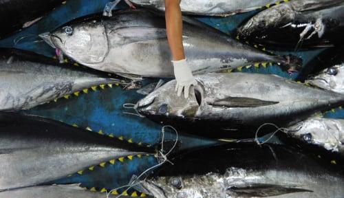 Foto Tarif Transportasi Udara Melambung, Bagaimana Dampaknya pada Ekspor Perikanan?