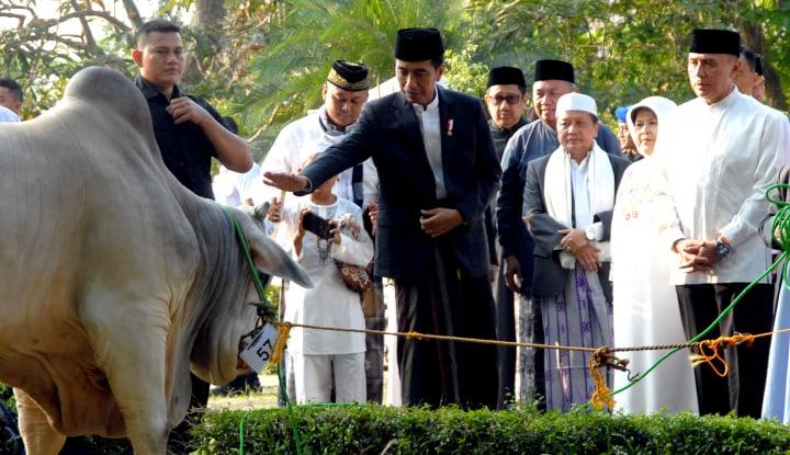 Jokowi Kurban Sapi 1,3 Ton di Sunda Kelapa - Warta Ekonomi