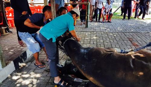 Gubernur Sumut Imbau Pembagian Daging Kurban Gunakan Besek