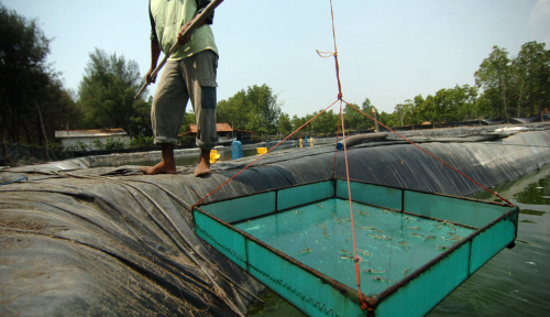 Foto Asuransi Perikanan, Sinergi OJK dan Kemen KP Lindungi Risiko Pembudidaya Ikan Kecil