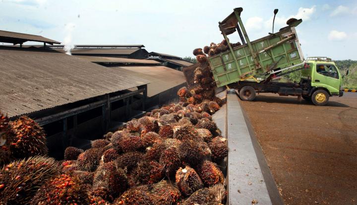Foto Sawit Sumbang Rp177 Triliun untuk Negara