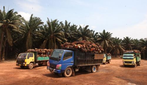 Foto Mentan Dukung Peremajaan Sawit Petani di Jambi