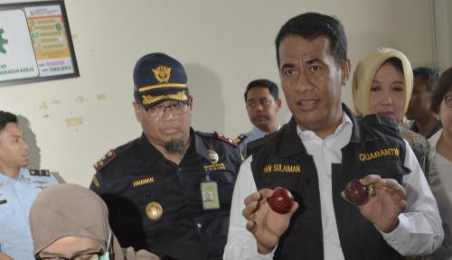 Foto Bolak-balik Mentan Janjikan Indonesia Swasembada Pangan, Kok Masih Impor?