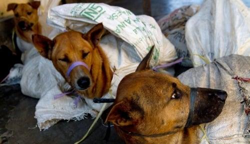 Foto Timbulkan Korban Jiwa, Kasus Rabies di Ambon Mengkhawatirkan