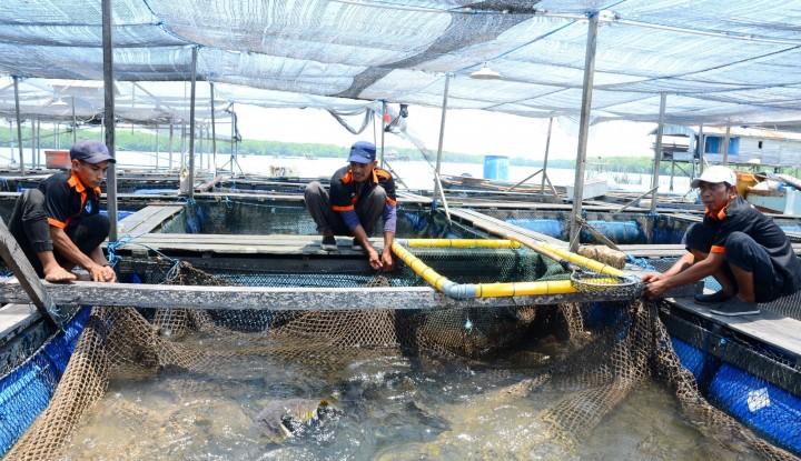 Foto Berita Meningkatkan Ekonomi Bontang dengan Budidaya Ikan Kerapu