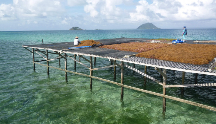 Produk Rumput Laut Indonesia Unjuk Gigi di Simposium Internasional di Jeju - Warta Ekonomi