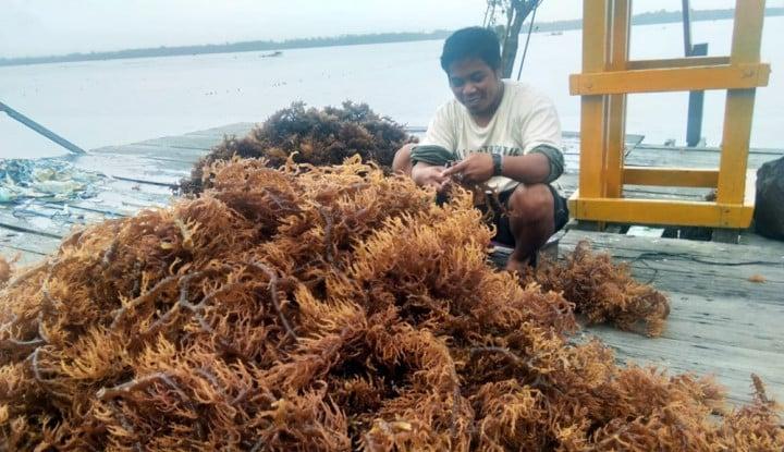 Stok Melimpah, Pemerintah Genjot Ekspor Rumput Laut - Warta Ekonomi