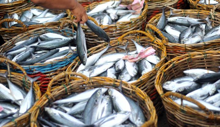 Pemerintah Siapkan KUR Khusus Perikanan, Ini Tujuannya! - Warta Ekonomi