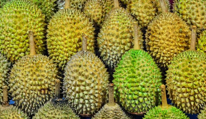 Foto Berita Kulon Progo Kembangkan Kawasan Durian Samigaluh