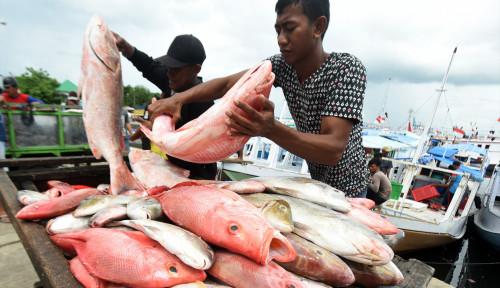 Foto 5 Negara Ini Penghasil Ikan Terbesar di Dunia, Bagaimana Indonesia?