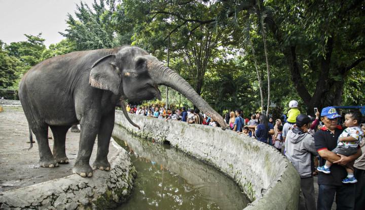 Foto Berita Stop Tunggangi Gajah! Hindari Terkena Infeksi