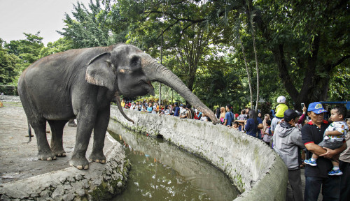 Foto Stop Tunggangi Gajah! Hindari Terkena Infeksi