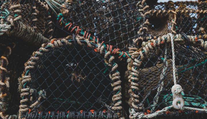 Pemerintah Gagalkan Penyelundupan Benih Lobster Senilai Rp30 Miliar - Warta Ekonomi
