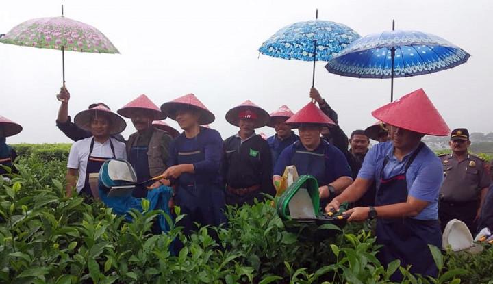 Mitra Kerinci Gelar Acara Tahunan Wiwitan Petik Teh di Solok Selatan - Warta Ekonomi