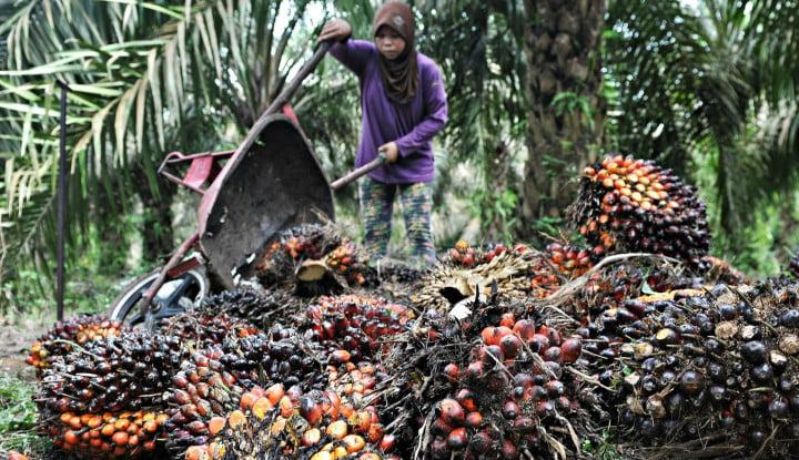 Sawit Indonesia: Tantangan dan Solusi Capai SDGs - Warta Ekonomi