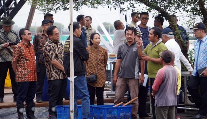 Foto Berita Kunjungi Perhutanan Sosial di Muara Gembong, Jokowi Ikut Panen Udang Vaname