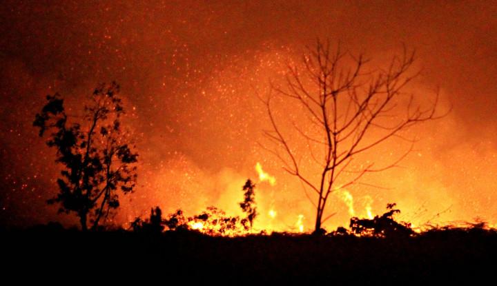 Masya Allah! Kebakaran di Inhu, Riau Mendekati Kawasan Habitat Harimau Sumatera - Warta Ekonomi
