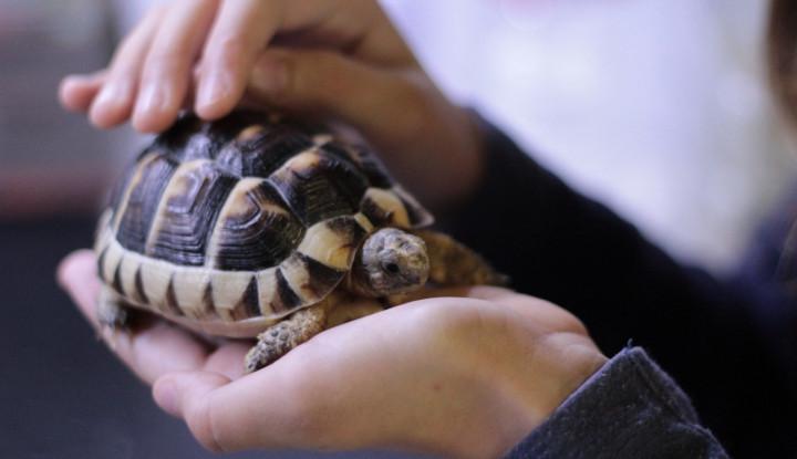 Duh, 550 Spesies Diprediksi Punah dalam Satu Abad