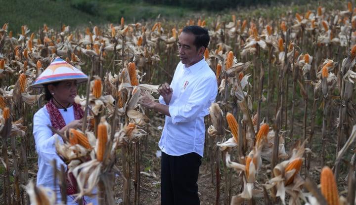 Jokowi: Untuk Menjaga Harga, Jagung Perlu Diekspor - Warta Ekonomi