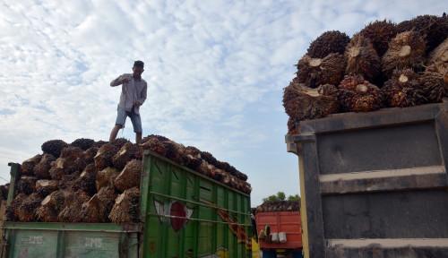 Foto Ekspor Minyak Sawit Indonesia Naik 4%, Terbesar ke Afrika