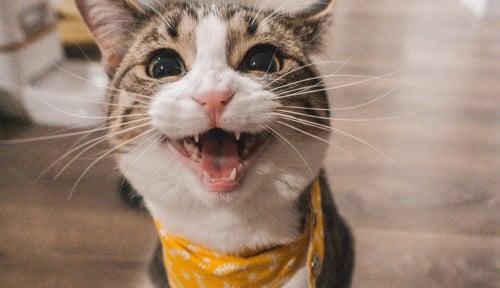 Foto Stres Akibat Pilpres? Pelihara Binatang Kesayangan Aja