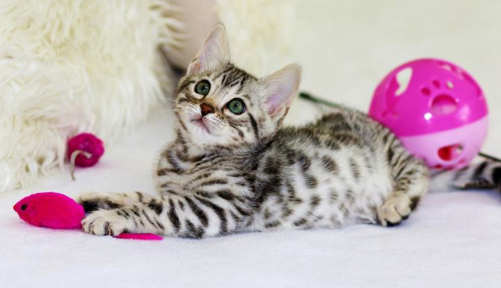 Modal Kecil, 4 Ide Bisnis Ini Menjanjikan Buat Pecinta Kucing, Jajal Yuk! - Warta Ekonomi