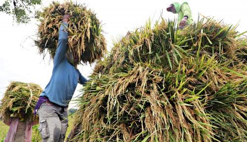 Foto Jokowi Dukung Petani Migrasi ke Pertanian Modern