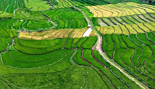 1,4 Juta Hektare Lahan Disiapkan untuk Lumbung Pangan
